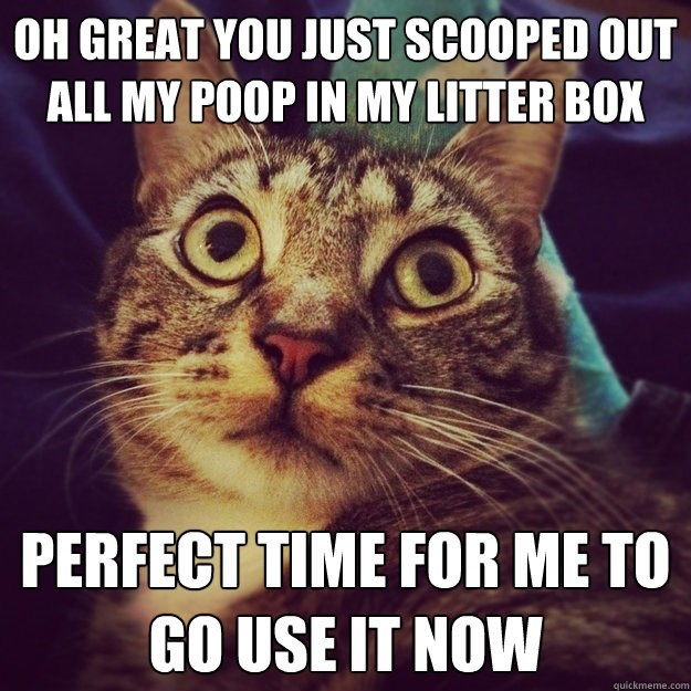 Cat - OH GREAT YOU JUST SCOOPED OUT ALL MY POOP IN MY LITTER BOX PERFECT TIME FOR ME TO GO USE IT NOW quickmeme.com