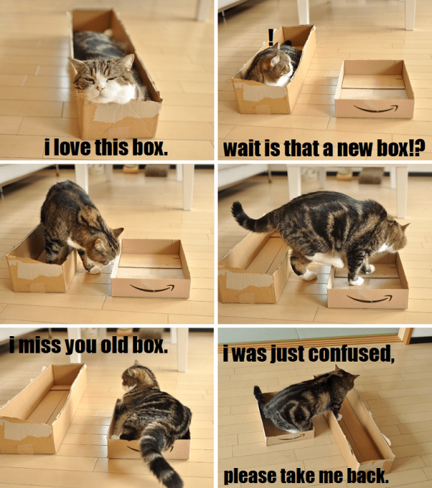 Cat - i love this box. wait is that a new box!? imiss you old box. iwas just confused, please take me back.