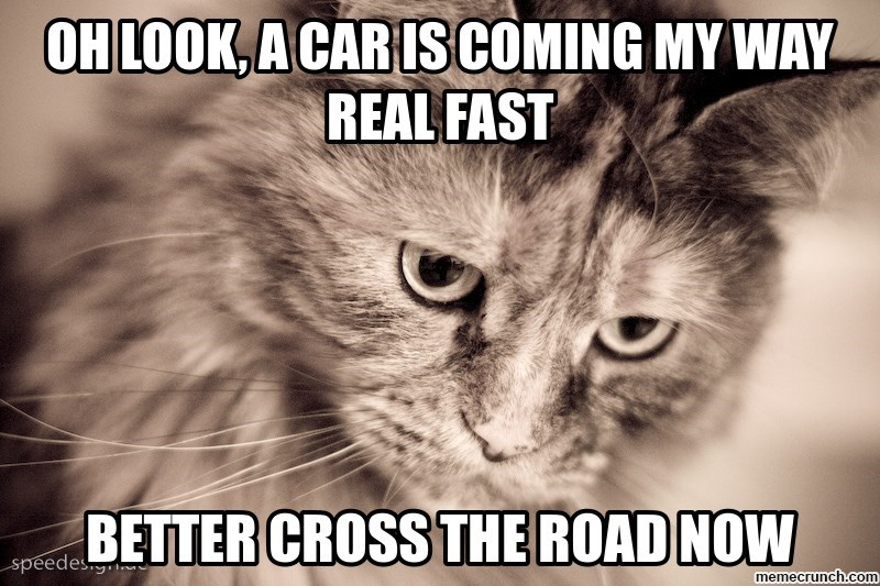 Cat - CHLOOK, A CAR ISCOMING MY WAY REAL FAST BETTER CROSS THE ROAD NOW speedes memecrunch.com