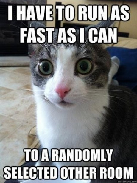 Cat - I HAVE TORUN AS FAST AS I CAN TOA RANDOMLY SELECTED OTHER ROOM quickmeme.c