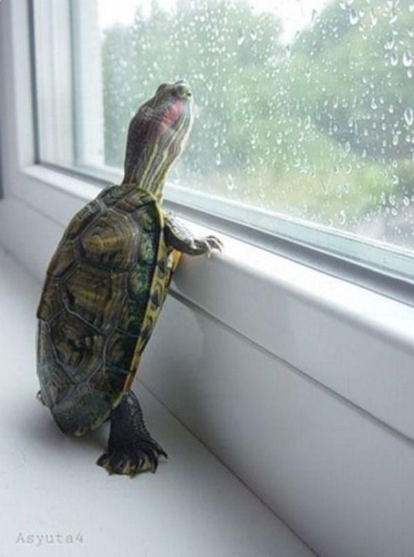 standing up - Pond turtle - Asyuta4