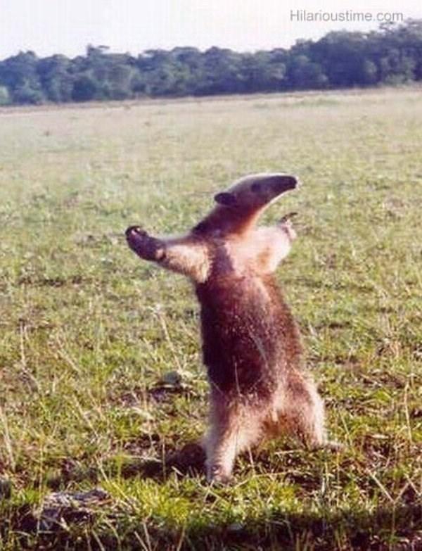 standing up - Vertebrate - Hilarioustime.com