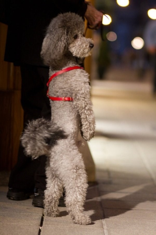standing up - Dog