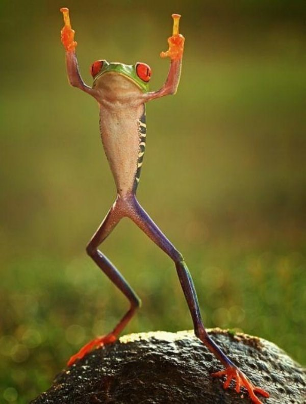 standing up - Tree frog