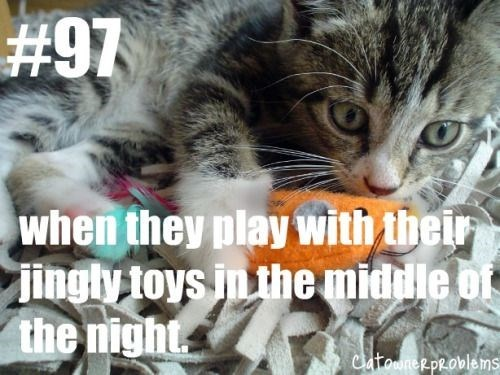 Cat - #97 when they play with their Jingly toys in the middle of the night Catooner problems