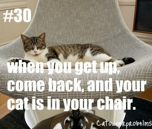 Cat - #30 when you get Come back and your catis in your chair. CatowneR peovelms