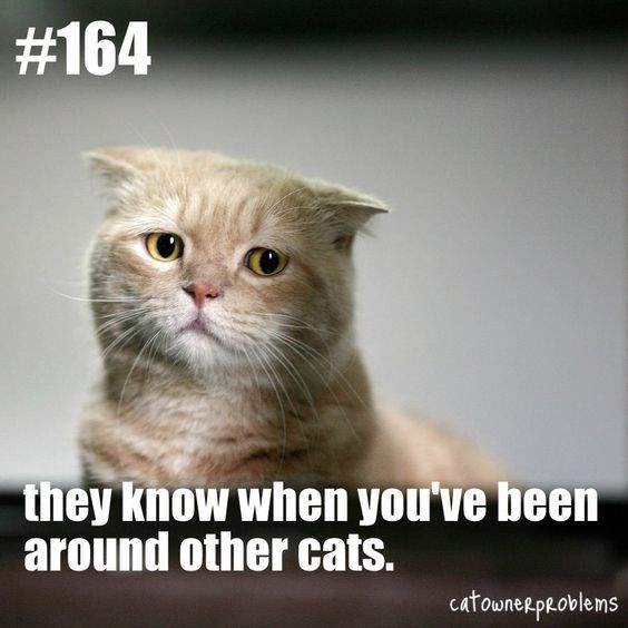 Cat - #164 they know when you've been around other cats. catownerpRoblems