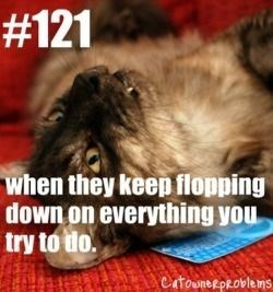 Shih tzu - #121 when they keep flopping down on everything you try to do. CatooneRPROvlems