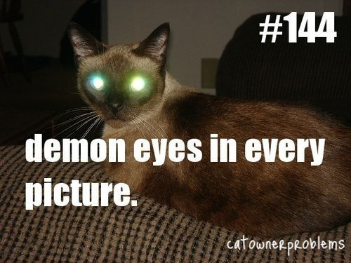 Cat - #144 demon eyes in every picture. CatowneepRoblems