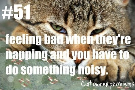Cat - #51 feeling bad wheirthey're napping and you have to do something noisy CatowneRpRoblems