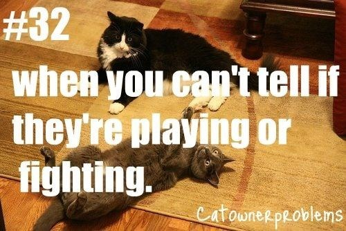 Photo caption - # 32 when you can'itell if they're playing or fighting. CatowneRpeoblems