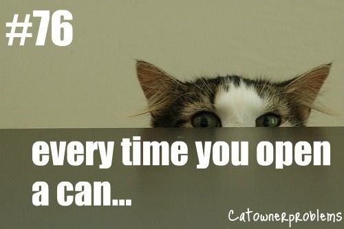 Cat - # 76 every time you open a ca... catouneRpRoblems
