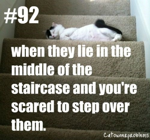 Text - #92 when they lie in the middle of the staircase and you're scared to step over them. Catownerpe.oblems