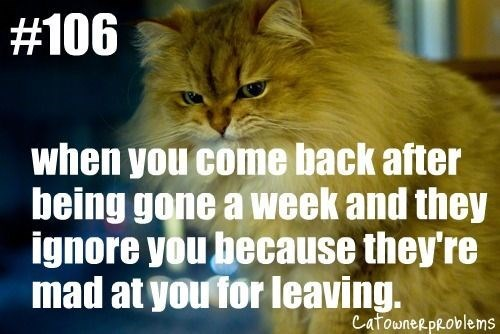 Cat - #106 when you come back after being gone a week and they ignore you hecause they're mad at you for leaving. CafowneRpRoblems