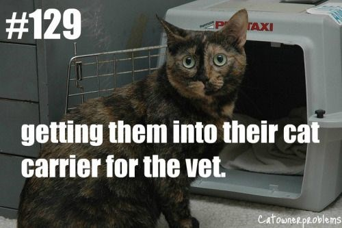Cat - #129 TAXI getting them into their cat carrier for the vet. CatownerpRoblems