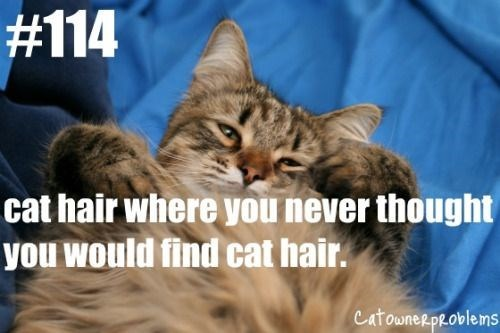 Cat - #114 cat hair where you never thought you would find cat hair. CatowneRpRoblems