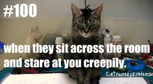Cat - #100 when they sit across the room and stare at you creepily. catownerproblemse