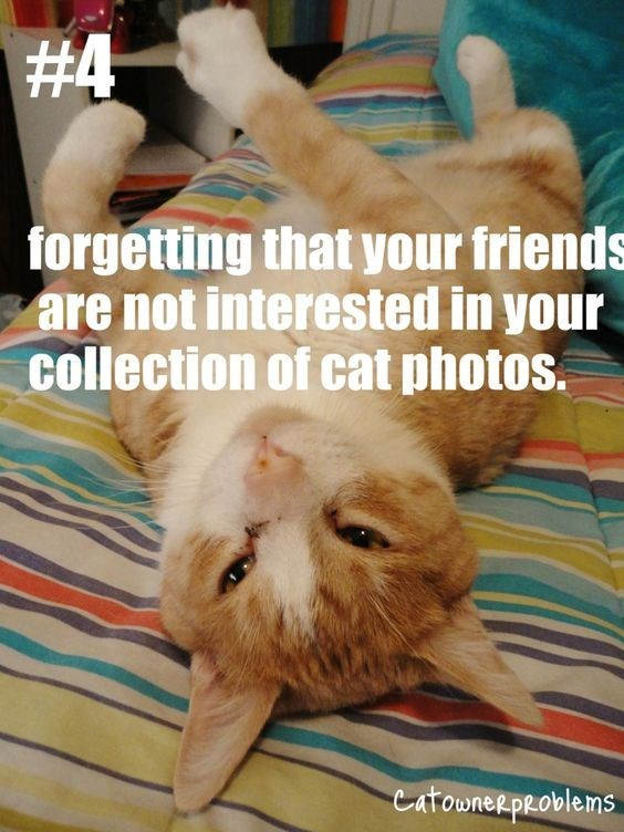 Cat - #4 forgetting that your friends are not interested in your collection of cat photos. Catownee problems