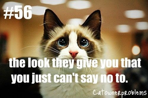 Cat - #56 the look they gve you that you just can't say no to. Catounerproblems