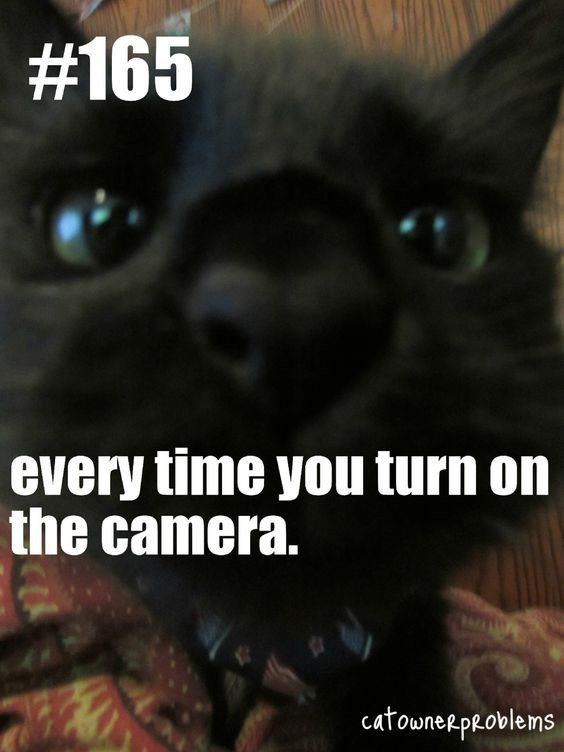 Cat - #165 every time you turn on the camera. catowneRpeoblems