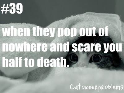Text - #39 when they pop out of nowhere and scare you half to death. CatowneRpRoblems