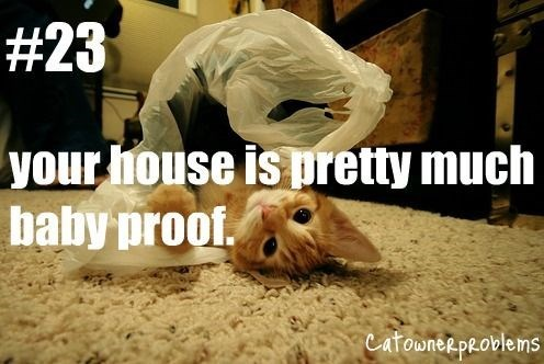 Photo caption - # 23 your house is pretty much baby proof. catowneepeoblems
