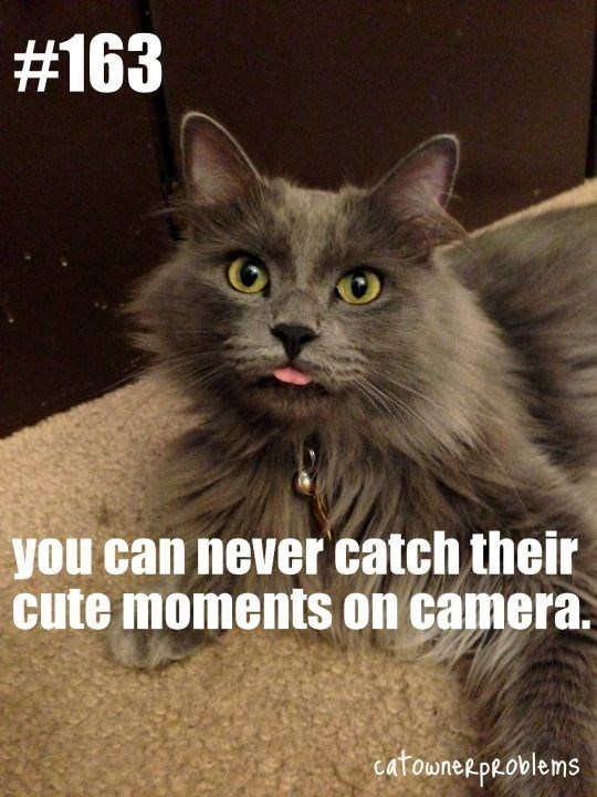 Cat - #163 you can never catch their cute moments on camera. catowneepeovlems