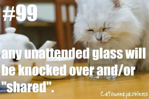 "Cat - #99 any unattended glass will be knocked over and/or ""shared"". CatowneR pRoblems"