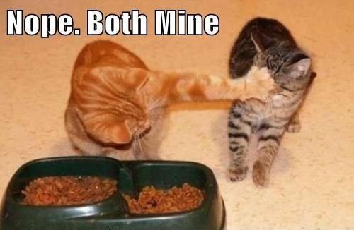 Cat - Nope. Both Mine
