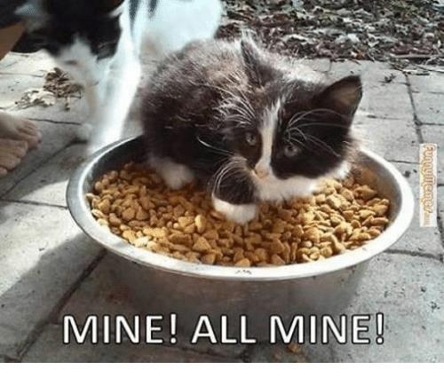 Cat - MINE! ALL MINE! Funnymeme