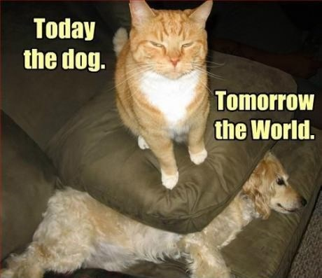 Cat - Today the dog. Tomorrow the World.