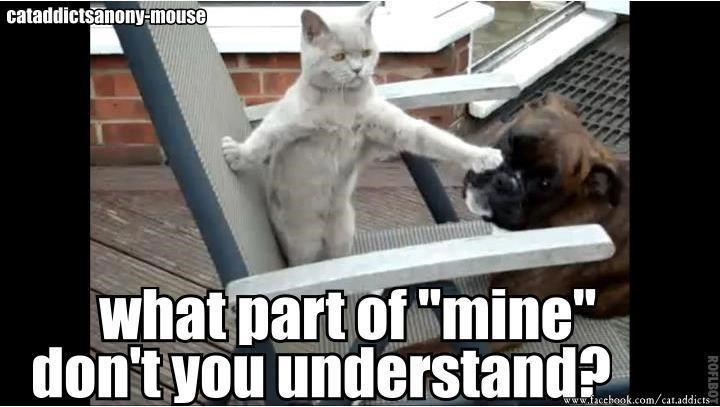 """Photo caption - cataddictsanony-mouse what part of""""mine"""" don't you understand? www.facchook.com/cat.addicts ROFLBOT"""