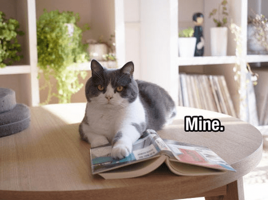 Cat - Mine.