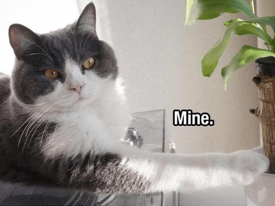 Cat - Mine