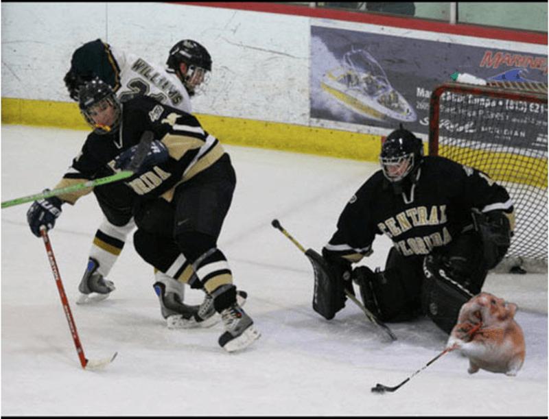 College ice hockey - MARINE WILLIAMS Mar p (813)621 260 S uDIAN DA ENTRAY
