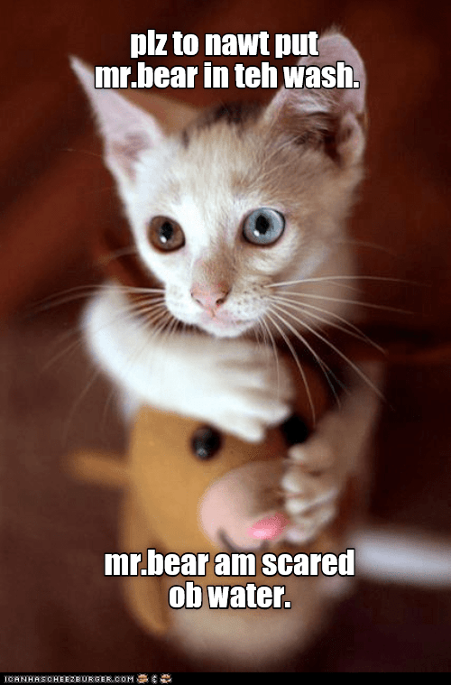 scared ob water lolcats lol cat memes funny cats funny