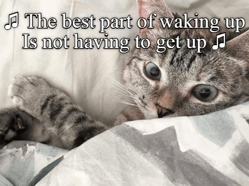 cat meme - Cat - The best part of waking up Is not having to get up
