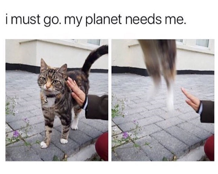 Cat - imust go. my planet needs me.