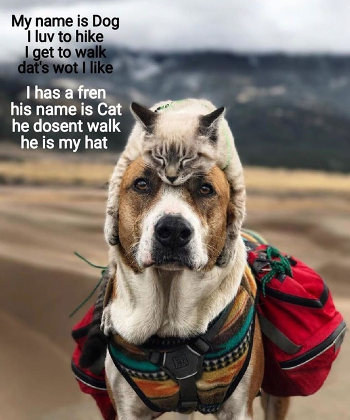 Mammal - My name is Dog I luv to hike I get to walk dat's wot I like I has a fren his name is Cat he dosent walk he is my hat