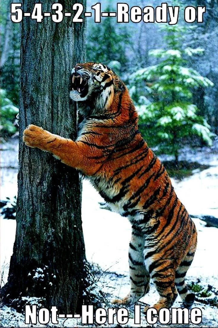Tiger Meme hiding behind a tree trunk and holding it