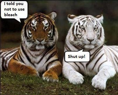 Tiger Memes of one dark tiger and a white one