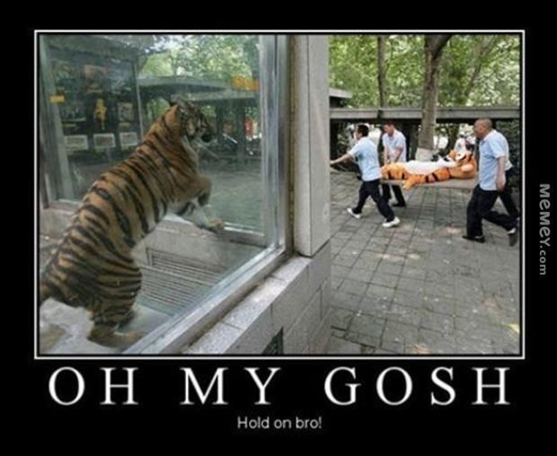 Tiger Meme of a tiger looking at a stuffed animal tiger