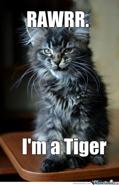 Tiger Meme of a kitten that is rawing like a tiger