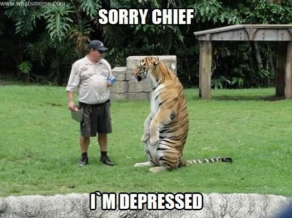 Tiger Meme looking sad next to his trainer