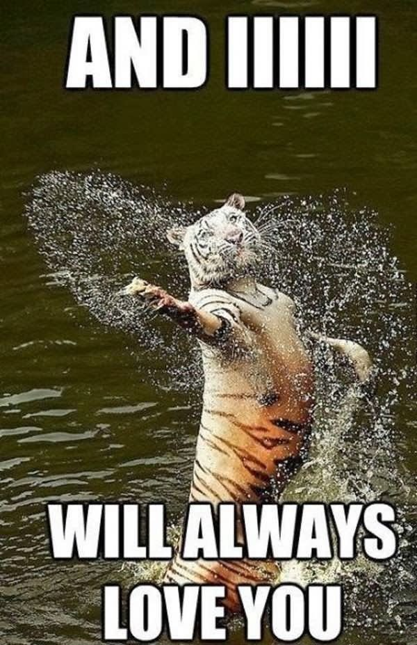 Tiger Meme coming out of the water gracefully with droplets of water all around him