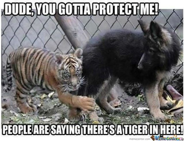 Tiger Meme of a baby tiger hugging a dogs leg