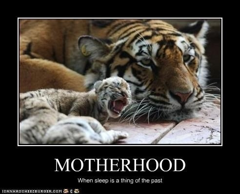 Tiger Memes of a mother tiger sitting awake next to her cub that is sleeping