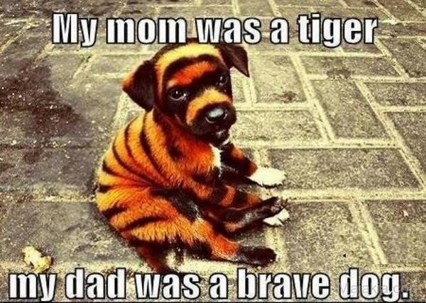 Tiger Memes of a puppy that is painted to look like a tiger