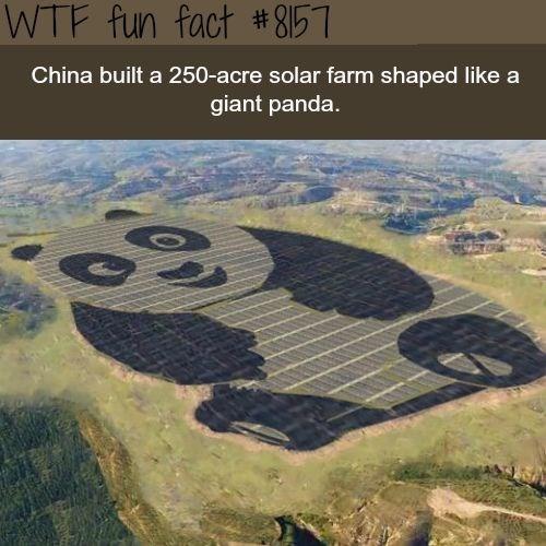 Thermokarst - WTF fun fact # 8157 China built a 250-acre solar farm shaped like a giant panda.