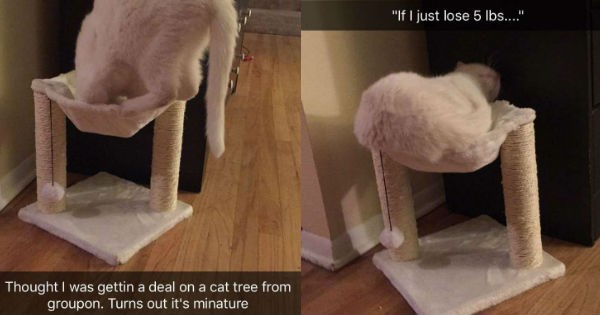 snapchat,hammock,cat tree,tiny,miniature,uncomfortable,Cats,funny
